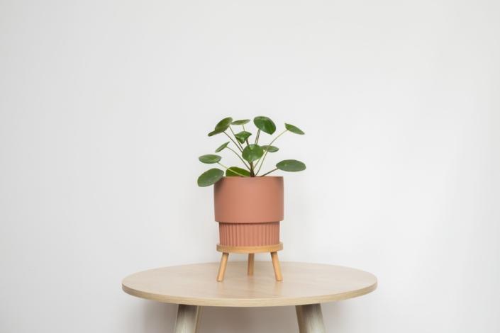 Pot Plant Photography